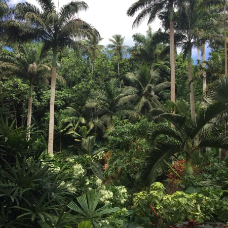 Hunte's Gardens: photo2.jpg