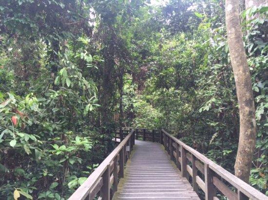 Sepilok, Malesia: natura