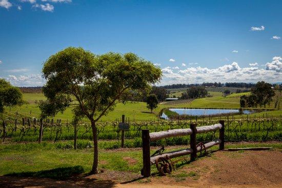 Pokolbin, Australia: Hanging Tree Winery entrance