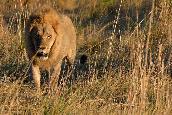Katima Mulilo, ناميبيا: Leon