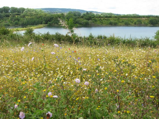 Tring, UK: lake view with wild flowers