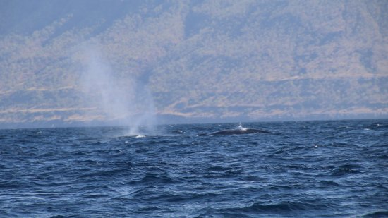 Compass Charters & Ocean Adventures - Day Tours: Whales on the the way to the island