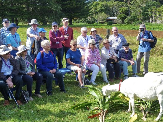 Isla Norfolk, Australia: Our group admiring 3 rather hungry goats