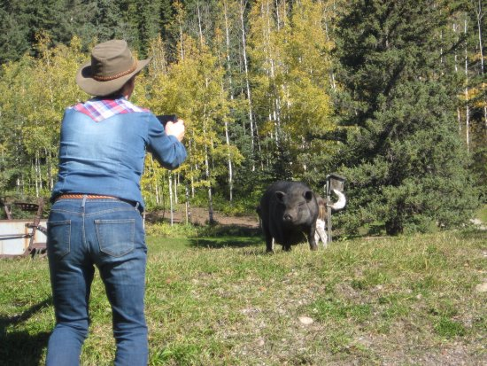 Hinton, Canada: Mary with the pot belled pig