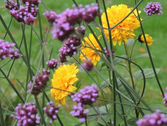 บลาร์นีย์, ไอร์แลนด์: blarney gardens