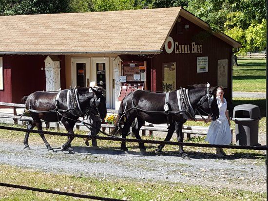 National Canal Museum : The mules - Hank and George