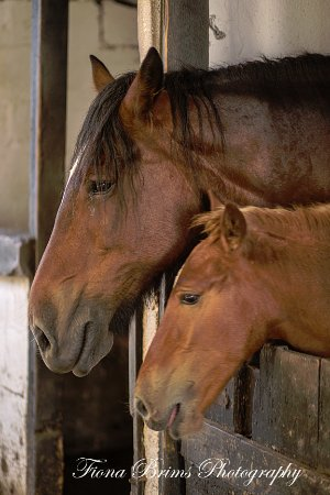 Redruth, UK: mum and foal