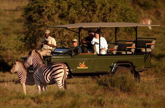Amakhala Safari Lodge: Game Drive