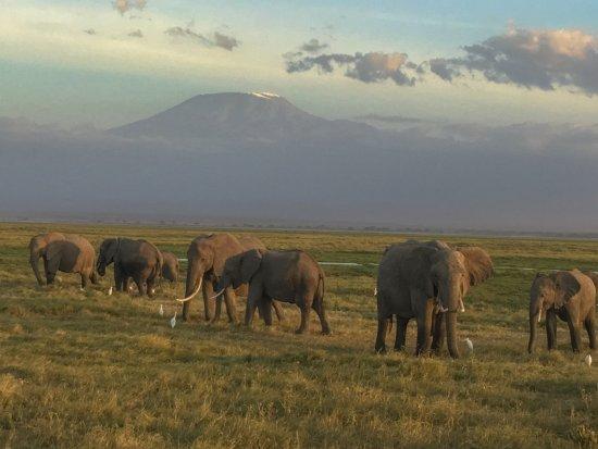 Ol Tukai Lodge: Elephants under Mount Kilimanjaro