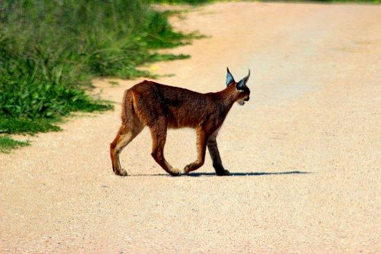 Amakhala Safari Lodge Photo