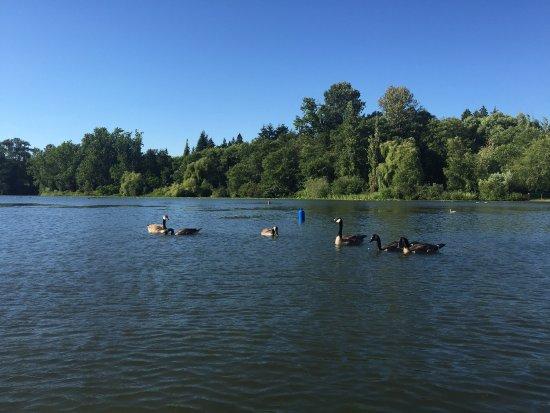 Burnaby, Canada : Deer lake park, the lake