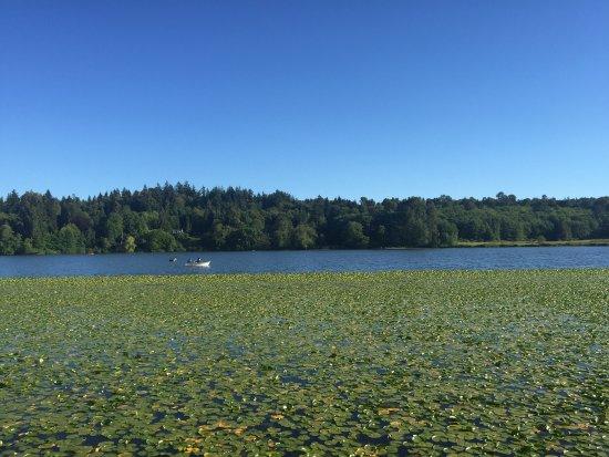 Burnaby, Canadá: Deer lake park, the lake