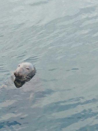 Eyemouth, UK: Seal spotting