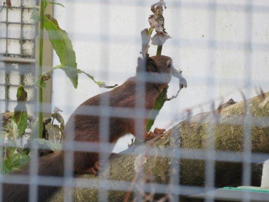Almere, Países Bajos: eekhoorn