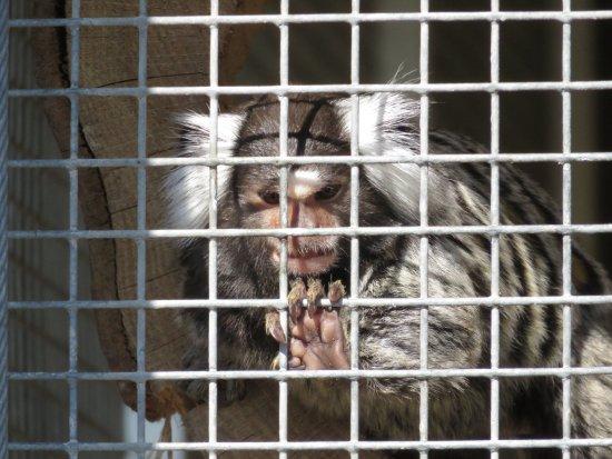 Almere, Países Bajos: klein aapje