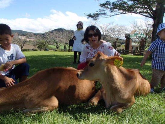 Miyakonojo, Japón: 子牛も放し飼い