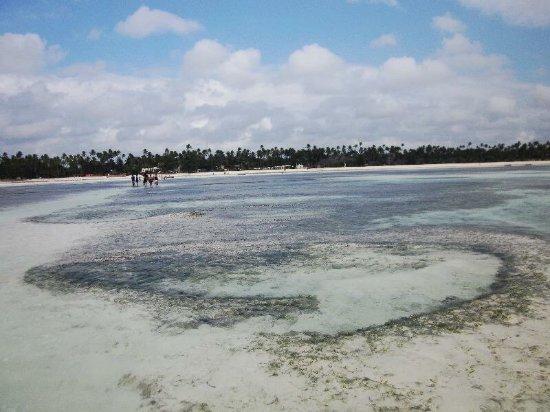 Dream of Zanzibar: photo2.jpg
