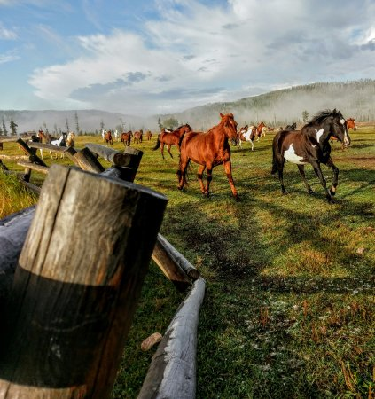 Clark, CO: Horses being rounded up for the day