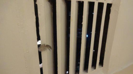 San Agustin International Hotel: Pombas no teto do quarto e banheiro