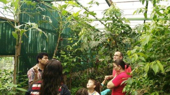Monteverde Butterfly Garden (Jardin de Mariposas): IMG_20160925_094335_large.jpg