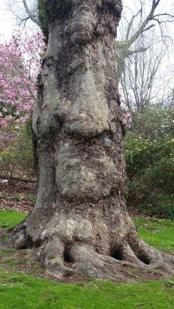 New Plymouth, Nova Zelândia: cool tree