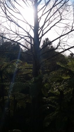 New Plymouth, Nieuw-Zeeland: sun shining through the trees