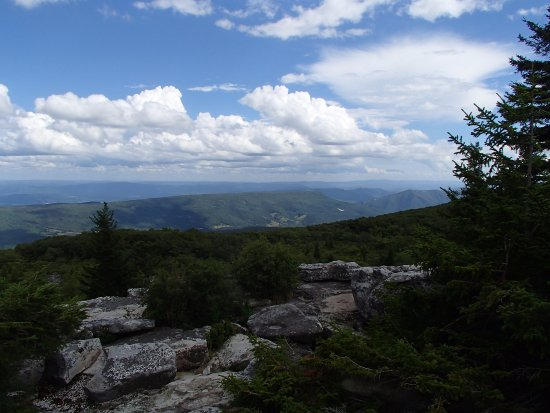 Elkins, WV: View from Blackbird Knob, Dolly Sods Wilderness