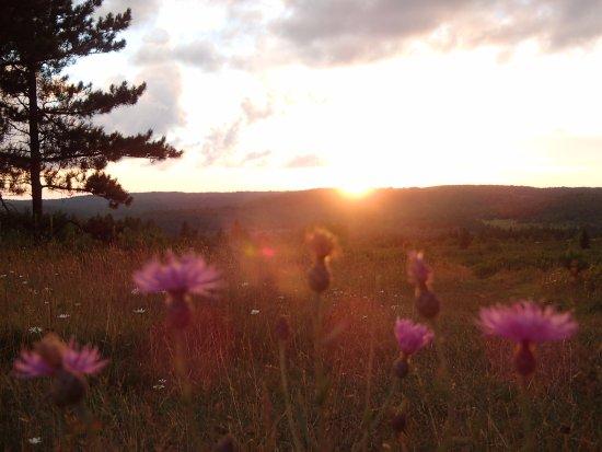 Elkins, WV: Sunset over Beaver Dam Trail, Dolly Sods
