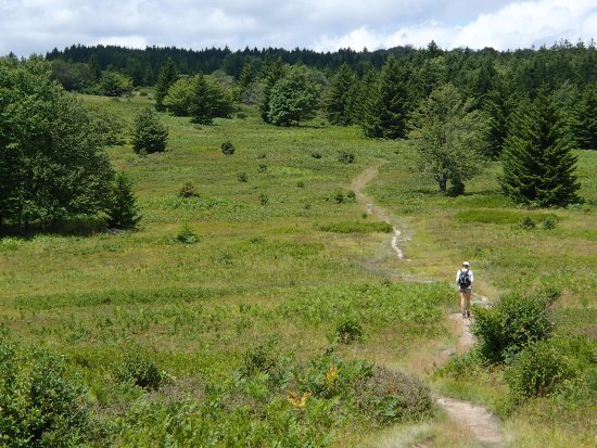 Dolly Sods Wilderness Area : Wonderfully, quiet and peaceful hiking