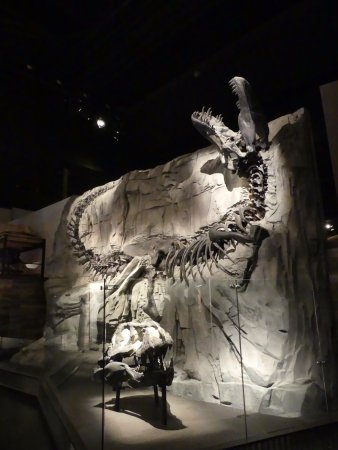 Королевский музей Тиррелл: Un prédateur entier au Royal Tyrell Museum