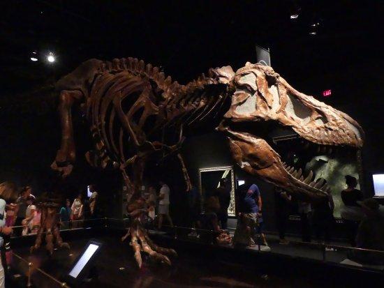 ราชพิพิธภัณฑ์ไทร์เรล: Tyrannosaurus Rex @ Royal Tyrell Museum