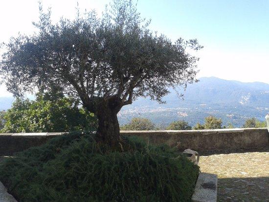 Ameno, Italien: Ulivo al centro della piazzetta panoramica