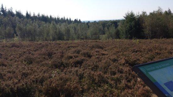 Amerongen, Paesi Bassi: The woods