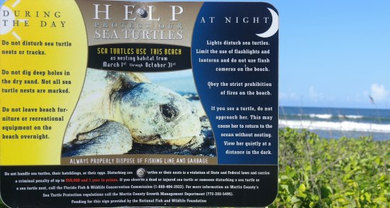 Hobe Sound, FL: TURTLE NESTING SIGN