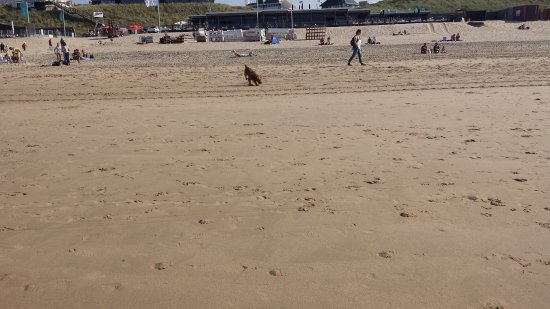 Bloemendaal, Nederland: Over 20 degrees and still enough space on the beach