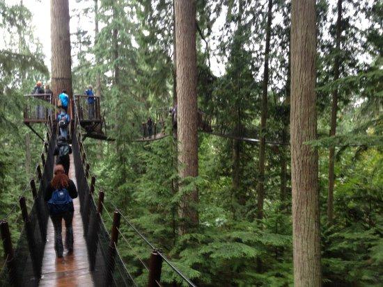 Kuzey Vancouver, Kanada: the canopy walk