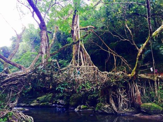 Mawlynnong Waterfall: photo1.jpg