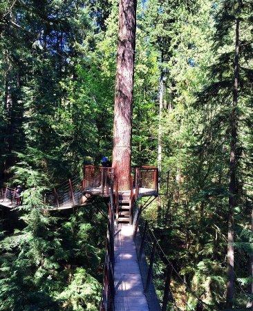 Kuzey Vancouver, Kanada: photo0.jpg