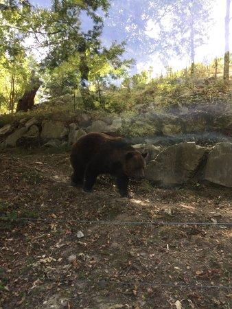 Leone Al Gzp Foto Di Giardino Zoologico Di Pistoia