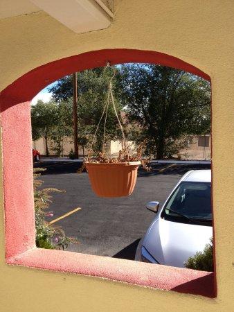 Days Inn Santa Fe New Mexico: dead dry plant