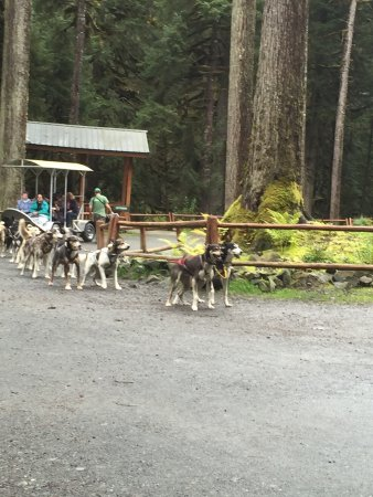Dog Sled Discovery & Musher's Camp: photo2.jpg