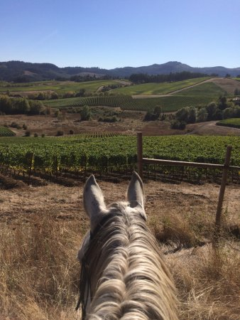 Carlton, Όρεγκον: Riding in the Vineyard!