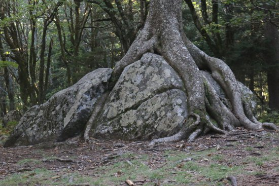 Grayson Highlands State Park: Magic tree.