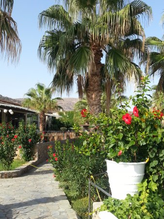 jardin fleuri - Bild von Ikaros Beach Resort & Spa, Malia - TripAdvisor