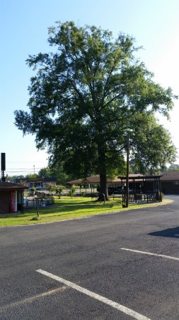 Park Motel Russellville: Nice large old tree by the CLOSED POOL!