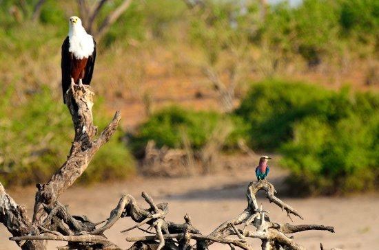 Kasane, Botswana: Buena pareja