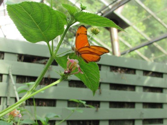 Buckfastleigh, UK: Orange butterfly