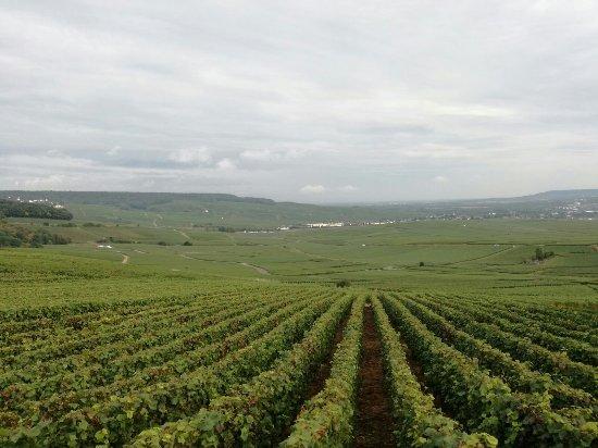 Hautvillers, Francia: Champagne G. Tribaut