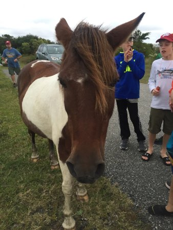 Assateague State Park Camping: Lots of great wildlife!