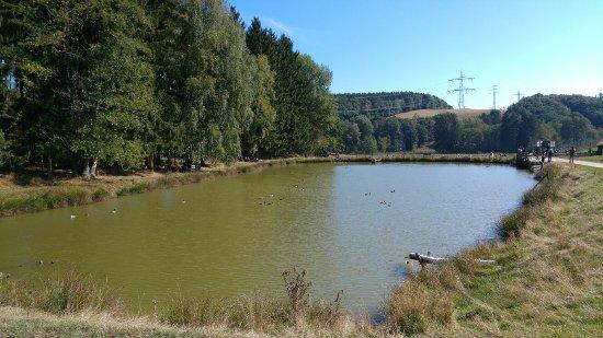 Rheinböllen, Deutschland: Hochwildschutzpark Hunsruck